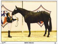 Veryblack La Chesnais - Ecurie EquiMagnia